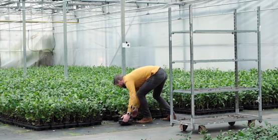 Kan deze thee van Hollandse bodem 'serieus impact' maken?
